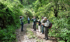Sierra de Manantlan bird watching